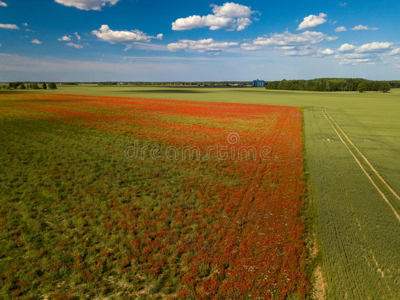 Πεδία παπαρουνών επάνω από την όψη Πολλά κόκκινα λουλούδια ν στοκ εικόνες