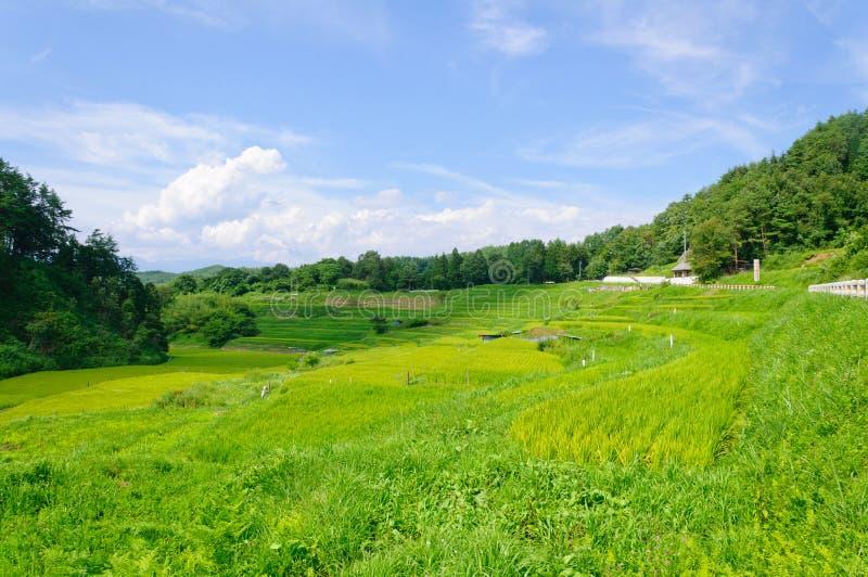 Πεδία ρυζιού Yokone στοκ εικόνες