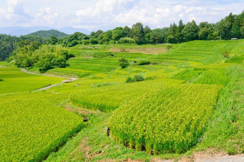 Πεδία ρυζιού Yokone στοκ φωτογραφία