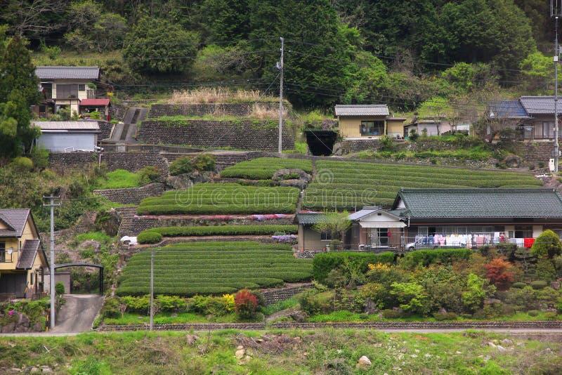 Πεδία τσαγιού στην Ιαπωνία στοκ φωτογραφίες