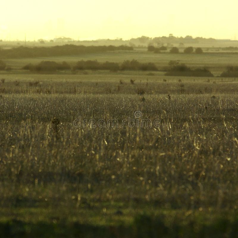 Download πεδία στοκ εικόνες. εικόνα από λιβάδι, πεδίο, γεωργίας - 118306