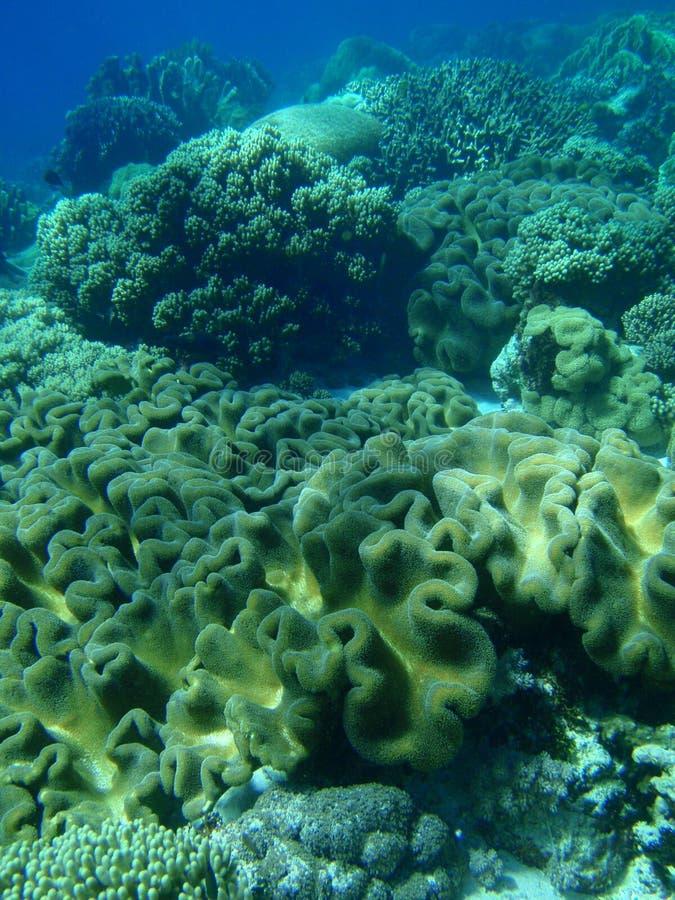 πεδίο κοραλλιών μαλακό στοκ εικόνα