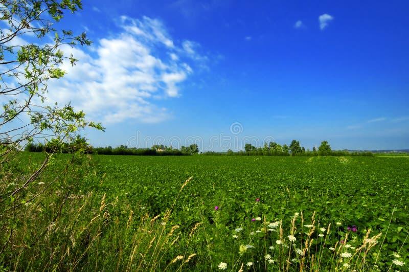 Download πεδίο πράσινο στοκ εικόνα. εικόνα από πράσινος, πεδία, ουρανός - 101527