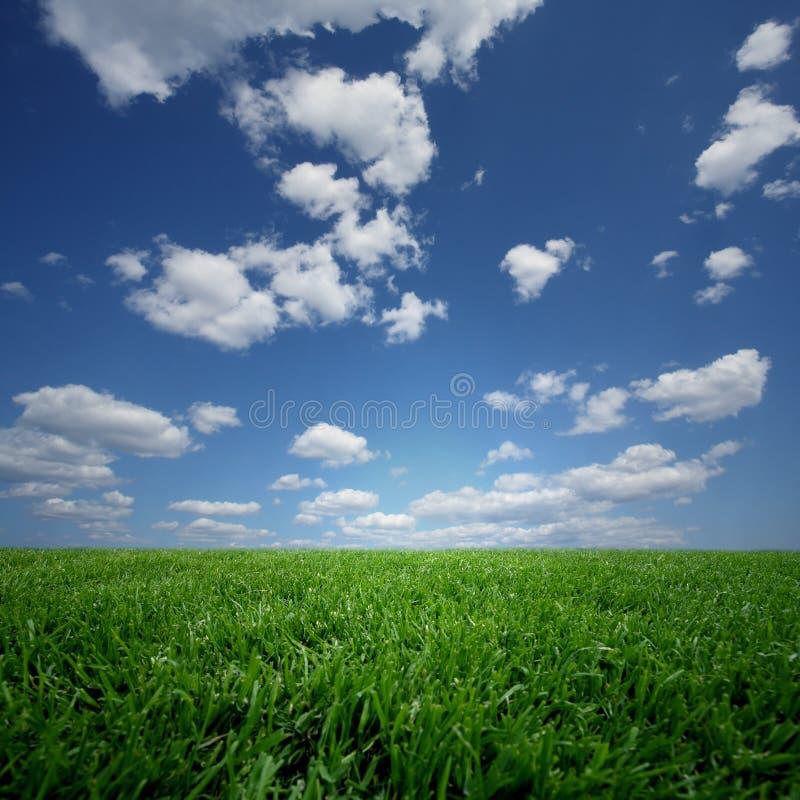πεδίο πράσινο στοκ εικόνες με δικαίωμα ελεύθερης χρήσης