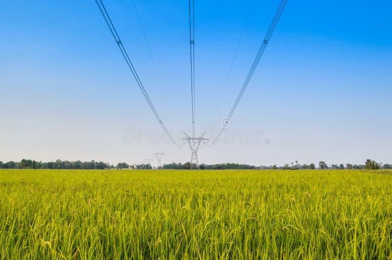 Πεδίο ρυζιού με το ρύζι panicle στοκ εικόνες με δικαίωμα ελεύθερης χρήσης