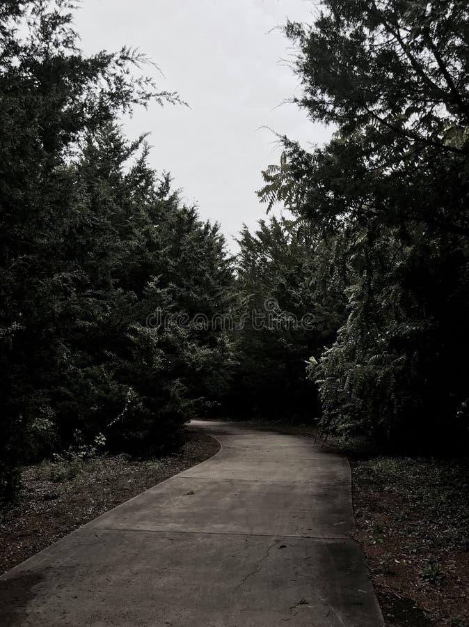 Πεζοδρόμιο σε ένα δάσος ερήμων στοκ φωτογραφία με δικαίωμα ελεύθερης χρήσης