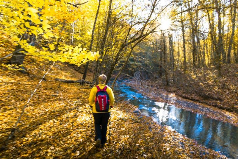 Πεζοπορία στο φθινοπωρινό δάσος στοκ φωτογραφίες