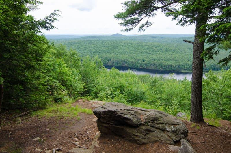 Πεζοπορώ βουνών που αγνοεί τα φυσικά δέντρα στοκ εικόνες