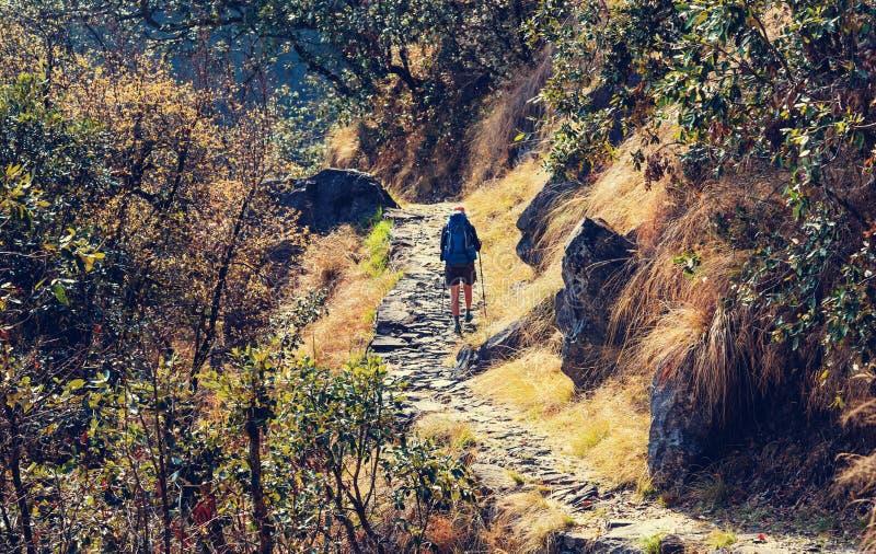 Πεζοπορώ στη ζούγκλα του Νεπάλ στοκ εικόνες