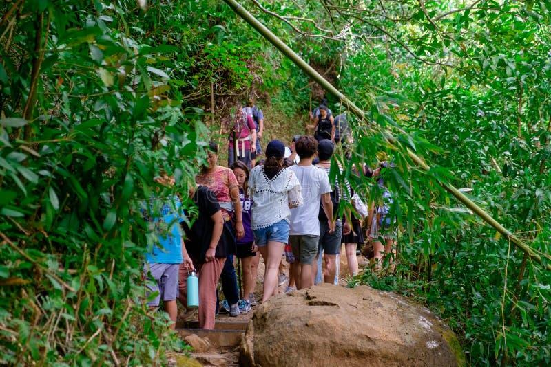 Πεζοπορώ Oahu Χαβάη ιχνών πτώσεων Manoa στοκ φωτογραφίες