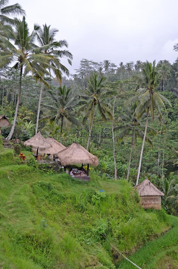 Πεζούλια ρυζιού Όμορφη φύση του Μπαλί στοκ φωτογραφία με δικαίωμα ελεύθερης χρήσης