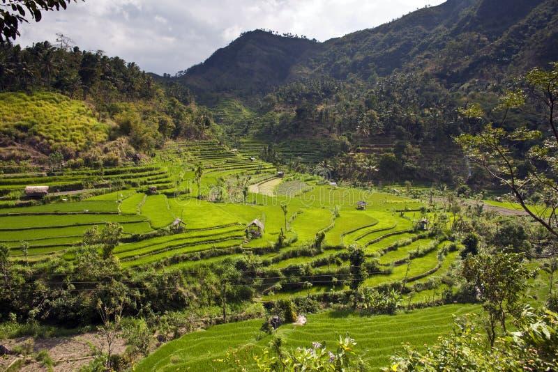 πεζούλια ρυζιού στοκ φωτογραφίες με δικαίωμα ελεύθερης χρήσης
