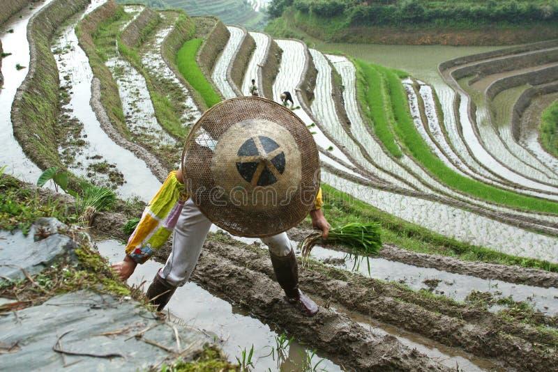 πεζούλια ρυζιού longji στοκ εικόνα με δικαίωμα ελεύθερης χρήσης