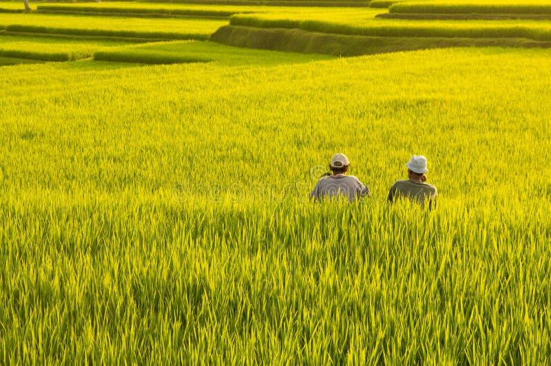 πεζούλι ρυζιού πεδίων στοκ εικόνα