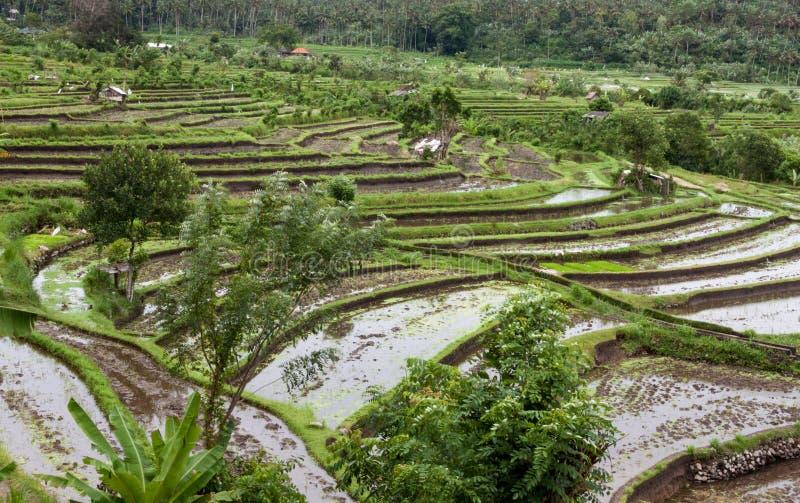 πεζούλι ρυζιού της Ινδο&nu στοκ εικόνες