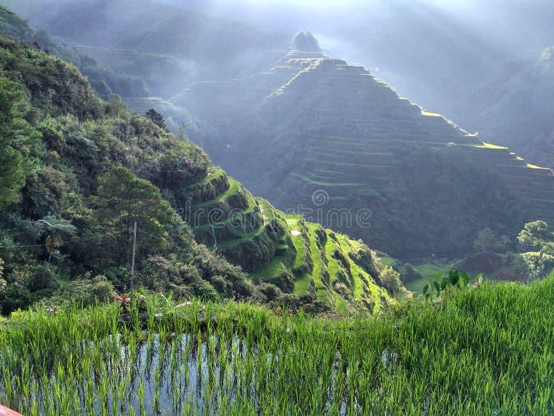 Πεζούλια ρυζιού στοκ εικόνα με δικαίωμα ελεύθερης χρήσης