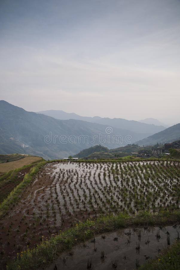 Πεζούλια ρυζιού Longsheg (Κίνα) στο ηλιοβασίλεμα στοκ εικόνες
