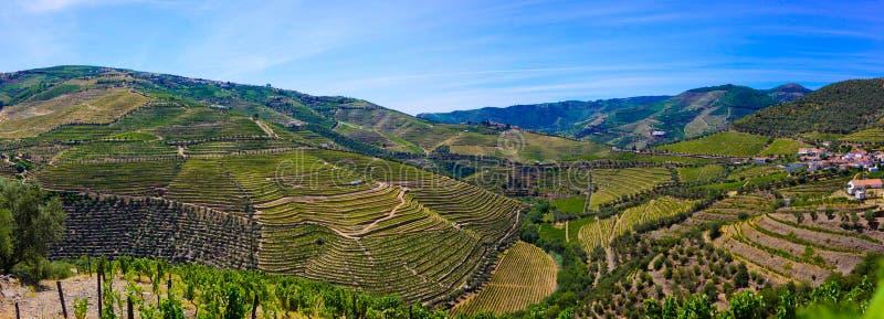 Πεζούλια Douro των αμπελώνων, κρασί του Πόρτο, αγροτικά κτήρια στοκ φωτογραφία