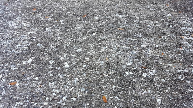 Πεζοδρόμιο στρειδιών και θαλασσινών κοχυλιών στοκ φωτογραφίες με δικαίωμα ελεύθερης χρήσης