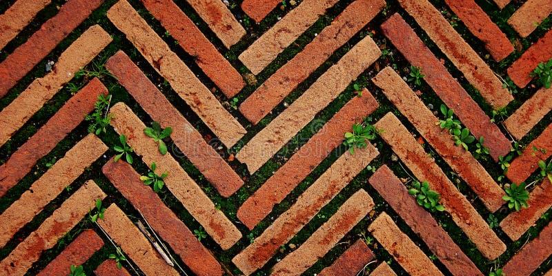 Πεζοδρόμιο τούβλου στη Ρώμη Οδόστρωμα με τη χλόη agedness στοκ φωτογραφία