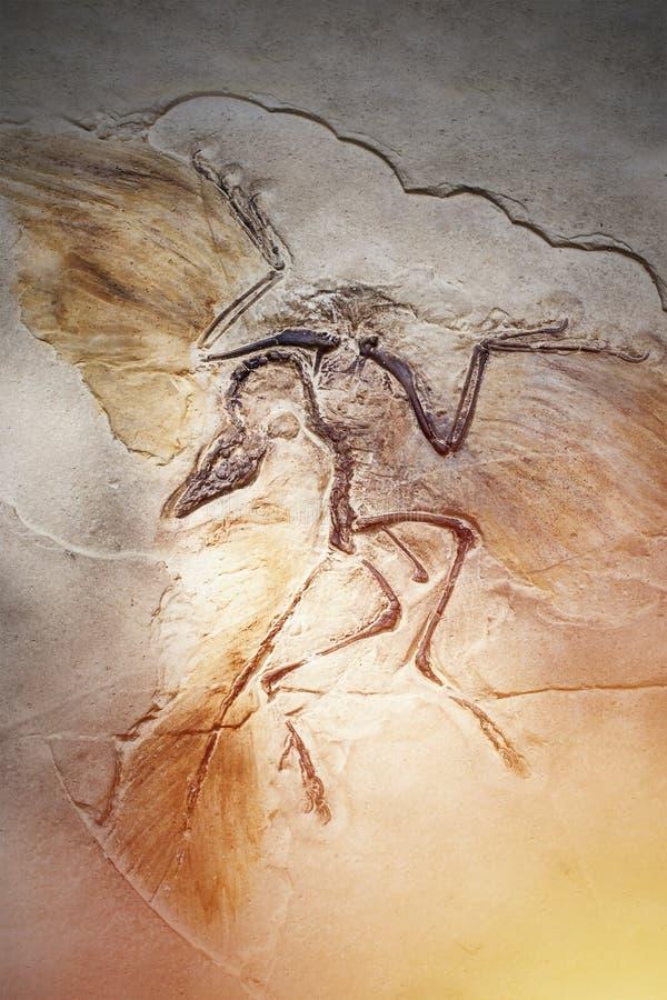Πεθαμένο πουλί στο απολίθωμα πετρών στοκ φωτογραφίες