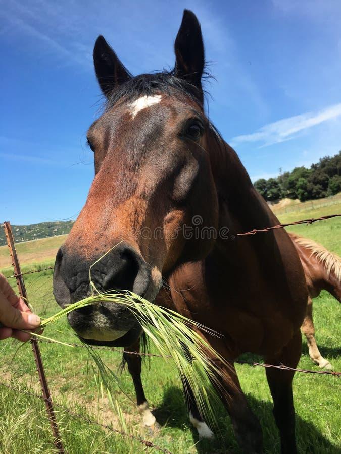 Πεινασμένο άλογο στοκ εικόνες με δικαίωμα ελεύθερης χρήσης