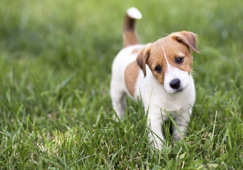 Πεινασμένο ευτυχές σκυλί κουταβιών που περιμένει τα τρόφιμά του στοκ φωτογραφία με δικαίωμα ελεύθερης χρήσης