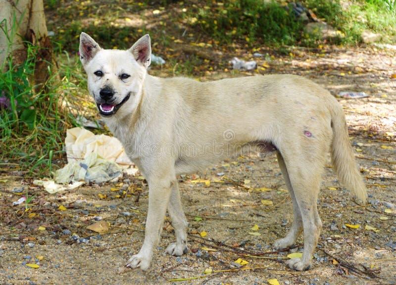 Πεινασμένο περιπλανώμενο σκυλί στοκ εικόνα με δικαίωμα ελεύθερης χρήσης