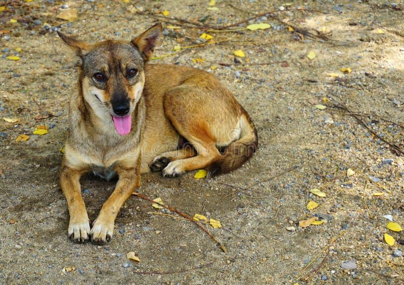 Πεινασμένο περιπλανώμενο σκυλί στοκ φωτογραφίες