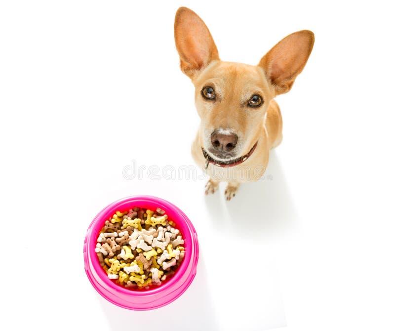 Πεινασμένο σκυλί με το κύπελλο τροφίμων στοκ εικόνα με δικαίωμα ελεύθερης χρήσης