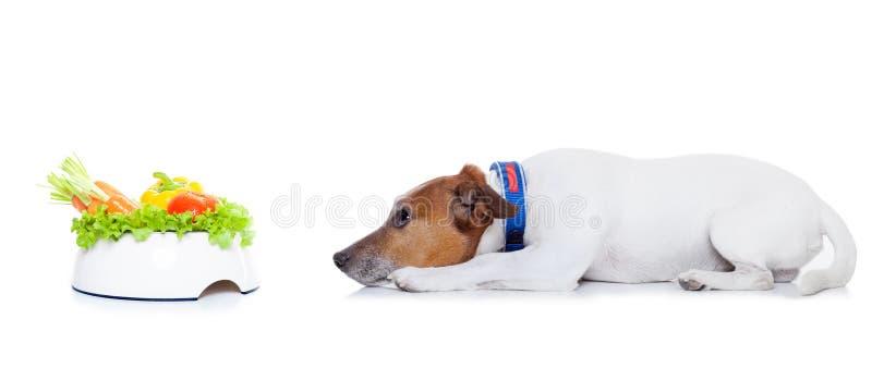 Πεινασμένο σκυλί με το υγιές κύπελλο στοκ φωτογραφία με δικαίωμα ελεύθερης χρήσης