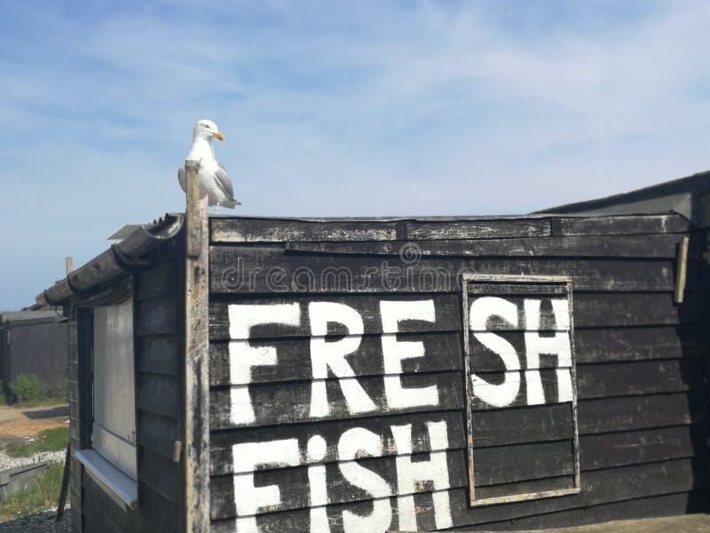 Πεινασμένο seagull στοκ εικόνα