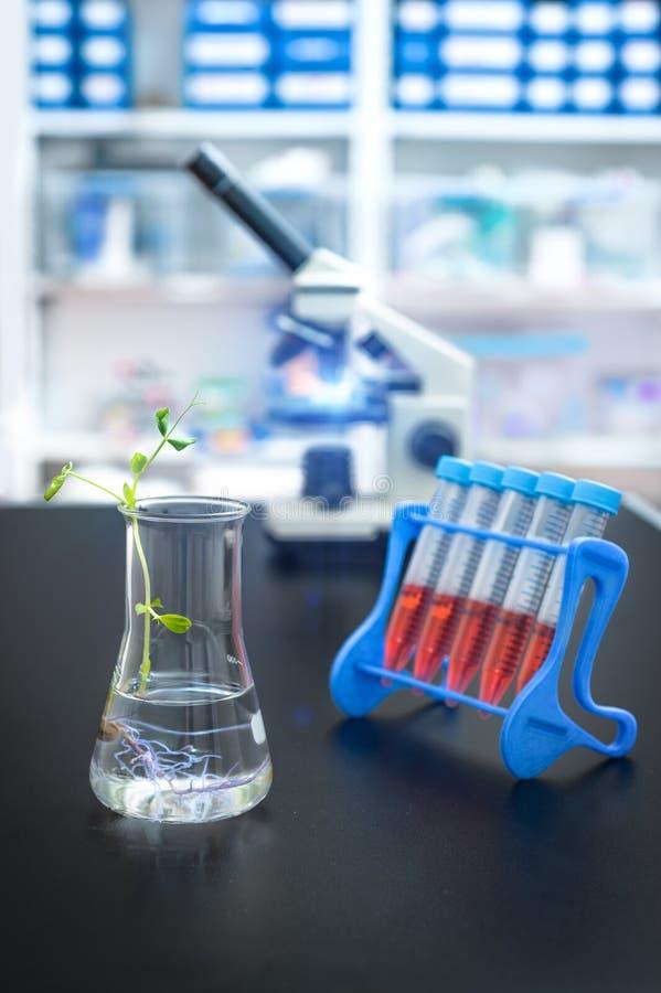 Πειραματικές εγκαταστάσεις σε μια φιάλη με το επιστημονικό εργαστήριο από την εστίαση στοκ εικόνα με δικαίωμα ελεύθερης χρήσης