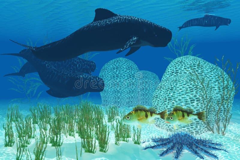 Πειραματικές φάλαινες ελεύθερη απεικόνιση δικαιώματος