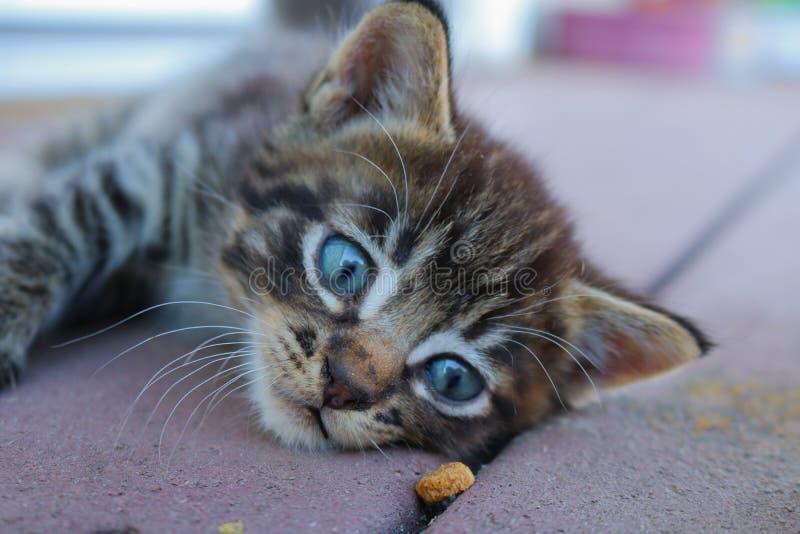Πειρασμός γατακιών στοκ εικόνες