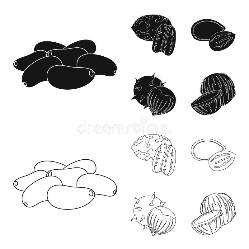 Πεκάν, καρύδι πεύκων, σπόροι κολοκύθας, κάστανο Διαφορετικά είδη καθορισμένων εικονιδίων συλλογής καρυδιών στο Μαύρο, διάνυσμα ύφ ελεύθερη απεικόνιση δικαιώματος