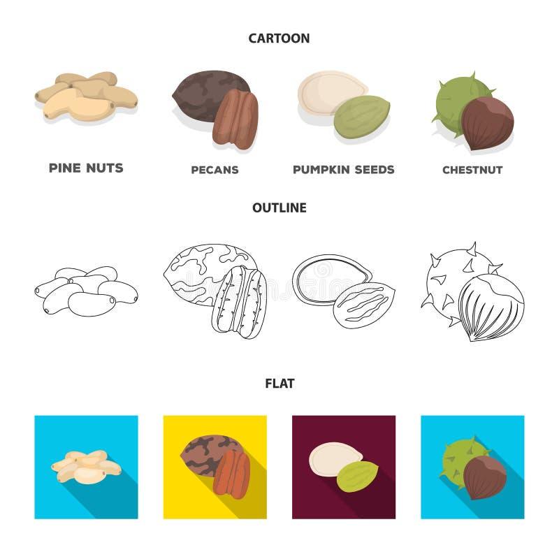 Πεκάν, καρύδι πεύκων, σπόροι κολοκύθας, κάστανο Διαφορετικά είδη καθορισμένων εικονιδίων συλλογής καρυδιών στα κινούμενα σχέδια,  διανυσματική απεικόνιση