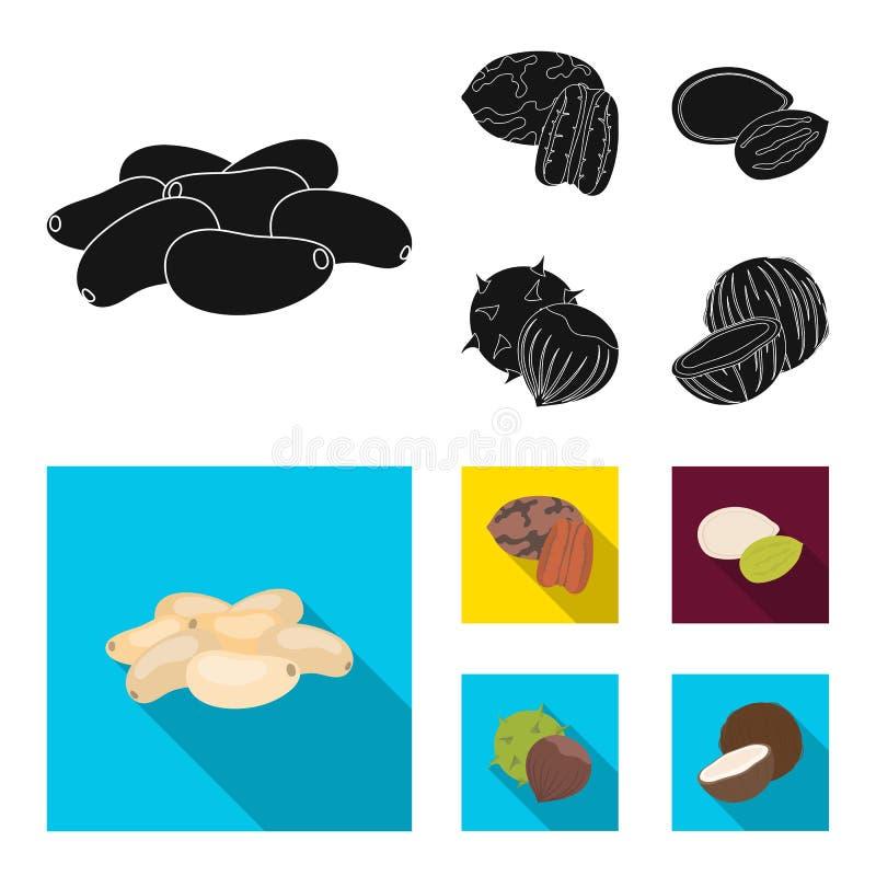 Πεκάν, καρύδι πεύκων, σπόροι κολοκύθας, κάστανο Διαφορετικά είδη καθορισμένων εικονιδίων συλλογής καρυδιών στο μαύρο, επίπεδο δια διανυσματική απεικόνιση