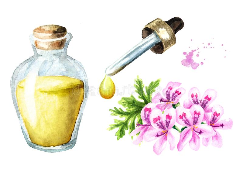 Πελαργόνιο graveolens ή πελαργόνιο Χ asperum, λουλούδι γερανιών και σύνολο ουσιαστικού πετρελαίου Συρμένη χέρι απεικόνιση Waterco διανυσματική απεικόνιση