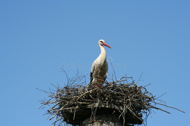 Download πελαργός στοκ εικόνες. εικόνα από birdbaths, άσπρος, βακκινίων - 525264