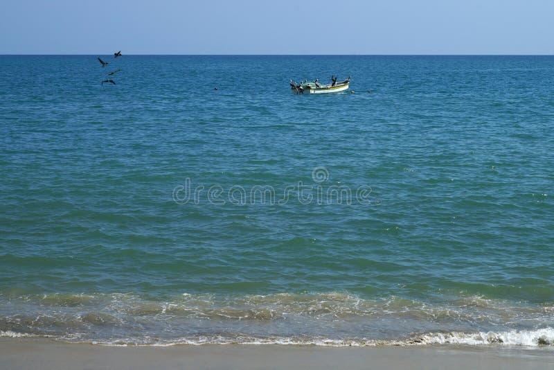 Πελεκάνοι που πετούν πέρα από το θαλάσσιο νερό και που κάθονται στη δεμένη fishermans βάρκα στοκ εικόνες