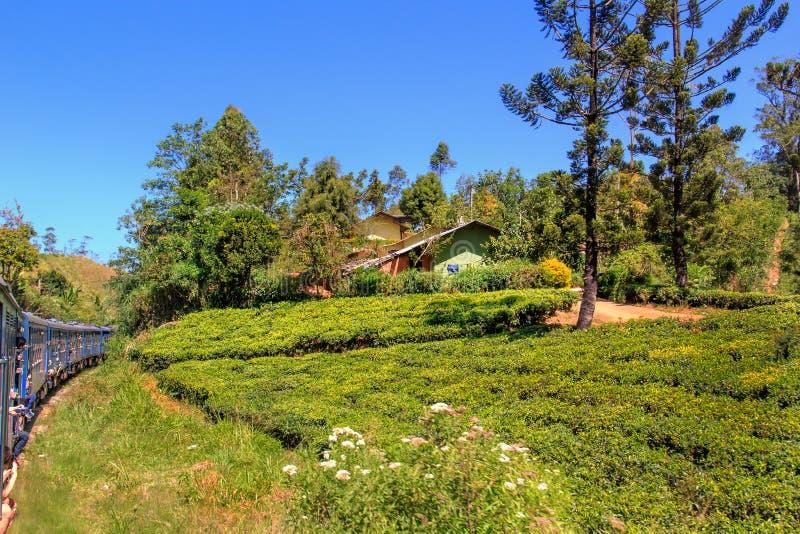 Περάσματα επιβατικών αμαξοστοιχιών μέσω των φυτειών τσαγιού σε έναν ηλιόλουστο στοκ φωτογραφία με δικαίωμα ελεύθερης χρήσης