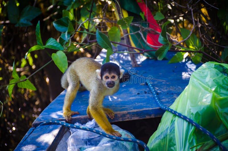 Περίεργος πίθηκος στοκ φωτογραφία με δικαίωμα ελεύθερης χρήσης