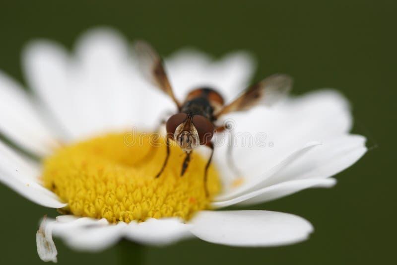 περίεργο έντομο στοκ φωτογραφία