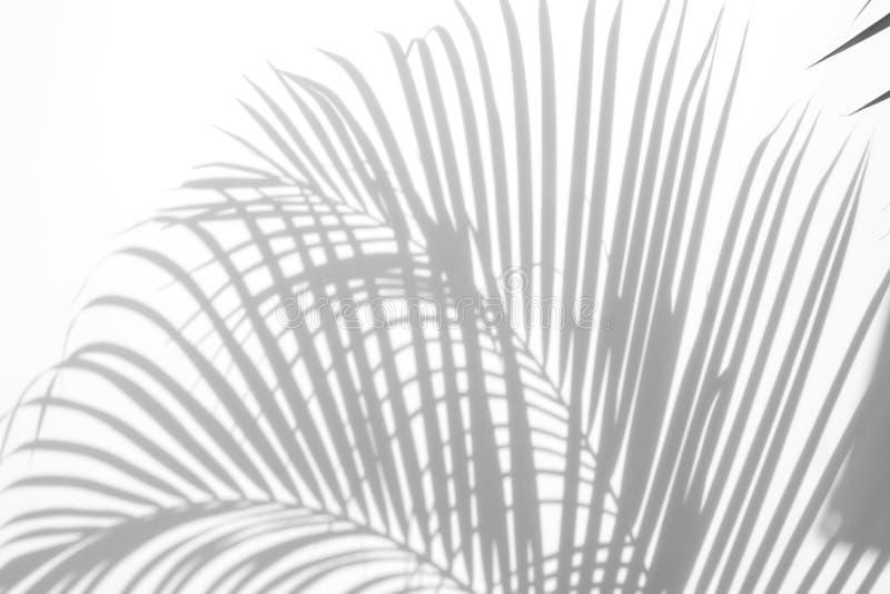 Περίληψη των φύλλων φοινικών σκιών σε ένα άσπρο υπόβαθρο μαύρο λευκό ελεύθερη απεικόνιση δικαιώματος