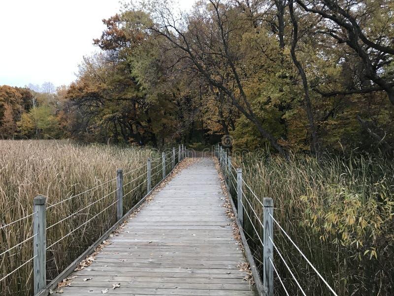 Περίοδος φθινοπώρου του πάρκου της Μινεσότα, ξύλινη γέφυρα με μονοπάτι στοκ εικόνα