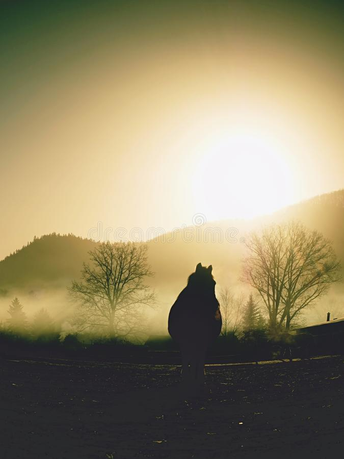 Περίπατοι αλόγων στην κρύα ημέρα πτώσης υδρονέφωσης στα βουνά στοκ εικόνες