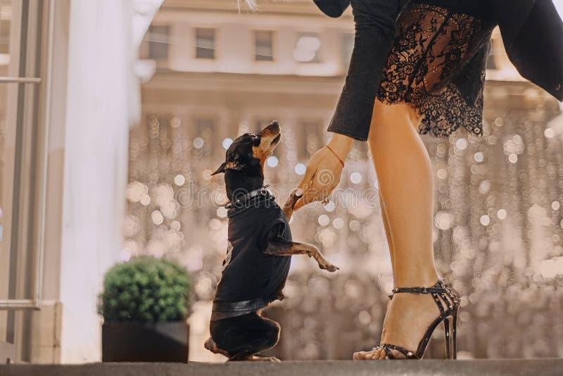 Περίπατοι κοριτσιών με το σκυλί της γύρω από την πόλη στοκ εικόνα με δικαίωμα ελεύθερης χρήσης