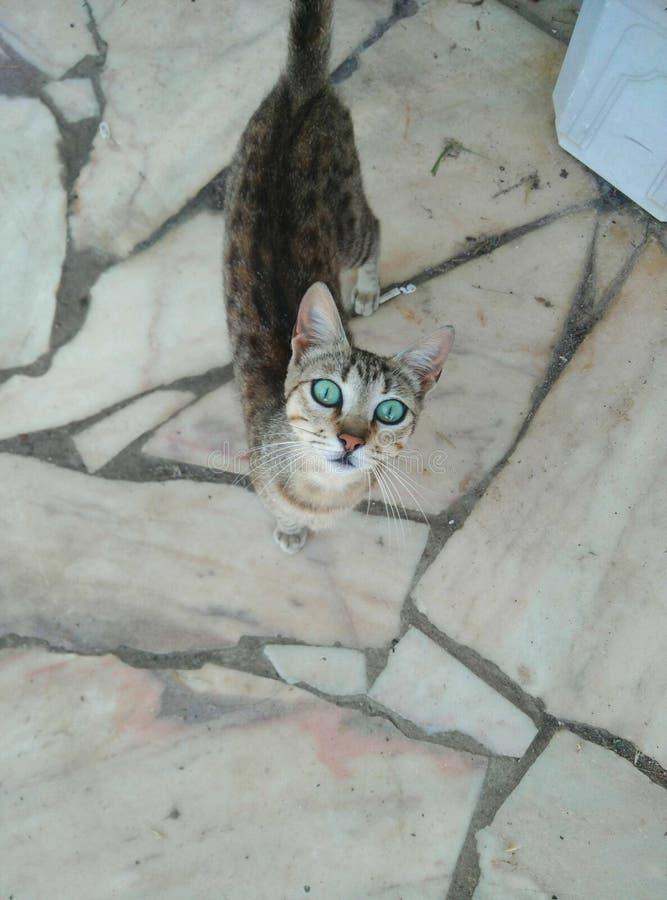Περίπατος γατών στοκ εικόνες