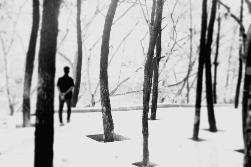 Περίπατος μόνο στο πάρκο στοκ εικόνες